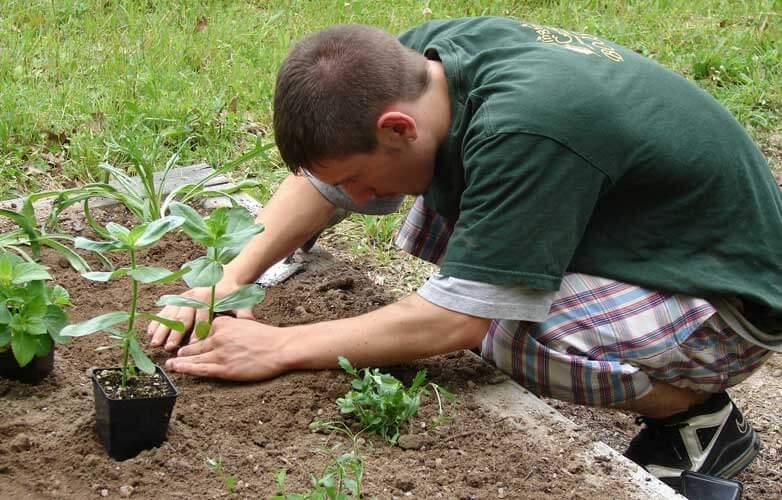 planting 782x500 1