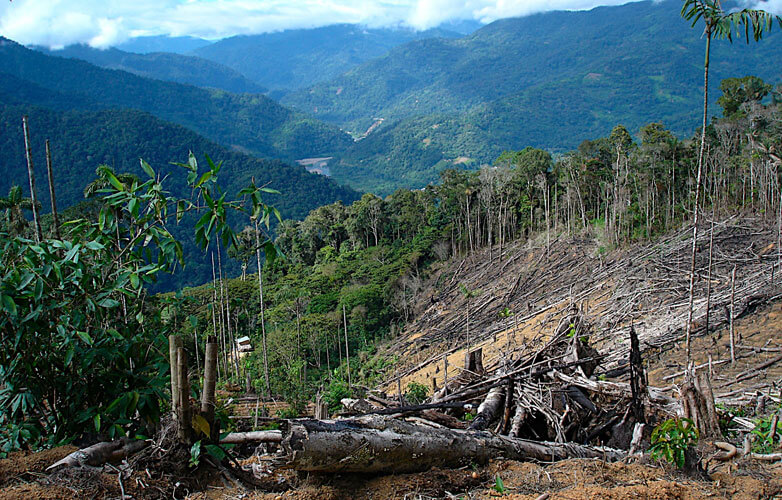 save forests 782x500 1