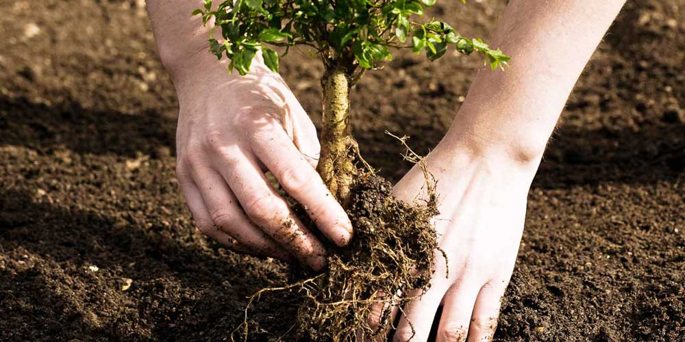 young planting 1000x500 1