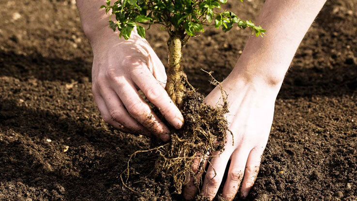 young planting 737x415 1